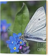Cabbage White Butterfly On Forget-me-not Wood Print