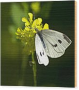Cabbage White Butterfly On Yellow Flower Wood Print