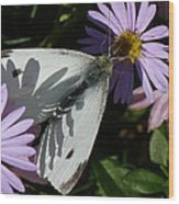 Cabbage White In Shadow Wood Print