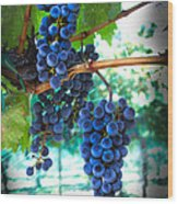 Cabernet Sauvignon Grapes Wood Print by Robert Bales