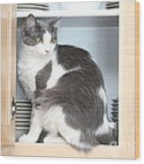 Cabinet Cat Wood Print