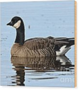 Cackling Goose In Water Wood Print