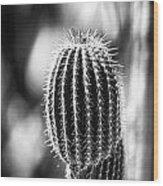 Cacti B And W  Wood Print