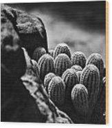 Cacti  B And W V2 Wood Print
