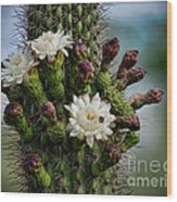 Cacti Bouquet  Wood Print
