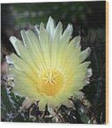 Cacti Flower In White Wood Print
