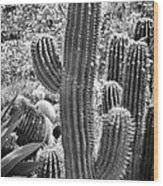 Cacti Habitat Bw Wood Print by Kelley King