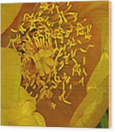 Cactus 2 Wood Print