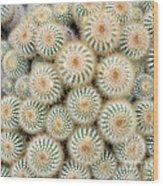Cactus 35 Wood Print