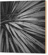 Cactus 5250 Wood Print