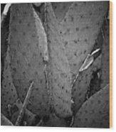 Cactus 5256 Wood Print