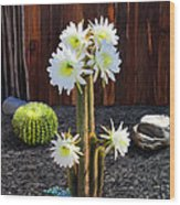 Cactus Blooms Wood Print