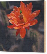 Cactus Blossom 1 Wood Print