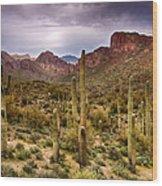 Cactus Canyon  Wood Print