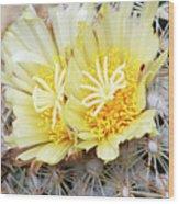 Cactus (coryphantha Echinus) Wood Print