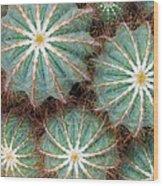 Cactus Family 2 Wood Print