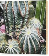 Cactus Family 3 Wood Print