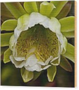 Cactus Flower 1 Wood Print