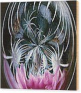 Cactus Flower Abstract Wood Print