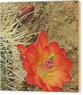 Cactus Flower Bright Wood Print by Feva  Fotos