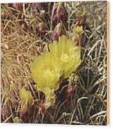 Cactus Flower In Bloom Wood Print