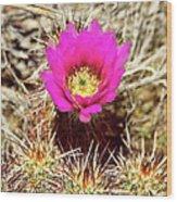 Cactus Flower Palm Springs Wood Print
