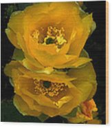 Cactus Flower Song Wood Print