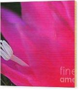 Cactus Flower Summer Bloom Wood Print