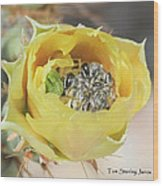 Cactus Flower With Ball Of Bees Wood Print