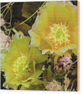 Cactus Flowers, Capitol Reef National Wood Print