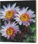 Cactus Flowers With Texture Wood Print