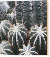 Cactus Glistening Wood Print