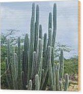 Cactus In Aruba Wood Print
