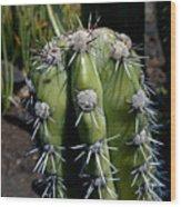 Cactus In Hawaii Wood Print