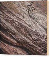 Cactus In Red Rocks Wood Print