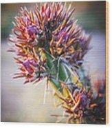 Cactus In Spring Bloom Wood Print