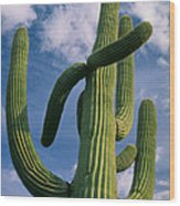 Cactus In The Clouds Wood Print