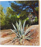 Cactus On A Rocky Coast Of French Riviera Wood Print