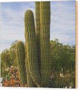 Cactus Monterey California Wood Print