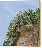 Cactus On A Cliff Wood Print