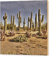 Cactus Patch Wood Print by George Lenz