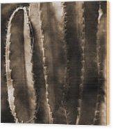Cactus Sepia Tone Panama Wood Print