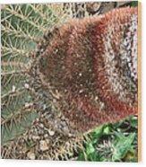 Cactus Wood Print by Sharon McLain