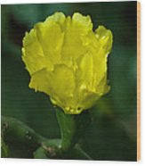 Cactus Splendor Wood Print