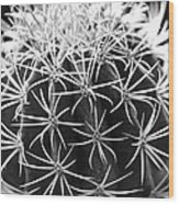 Cactus Thorn Pattern Wood Print