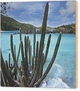 Cactus Trunk Bay  Virgin Islands Wood Print