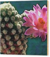 Cactus With Pink Sunlit Bloom Wood Print