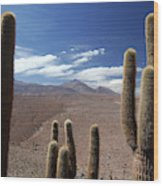 Cactus With The Andes Mountains Wood Print