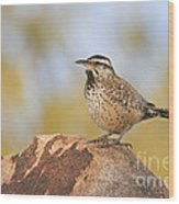 Cactus Wren On Rock Wood Print