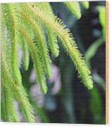 Cactus2750 Wood Print